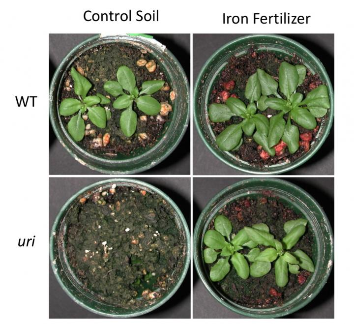 Iron-Rich Plants to Help People Fight Deficiencies Naturally