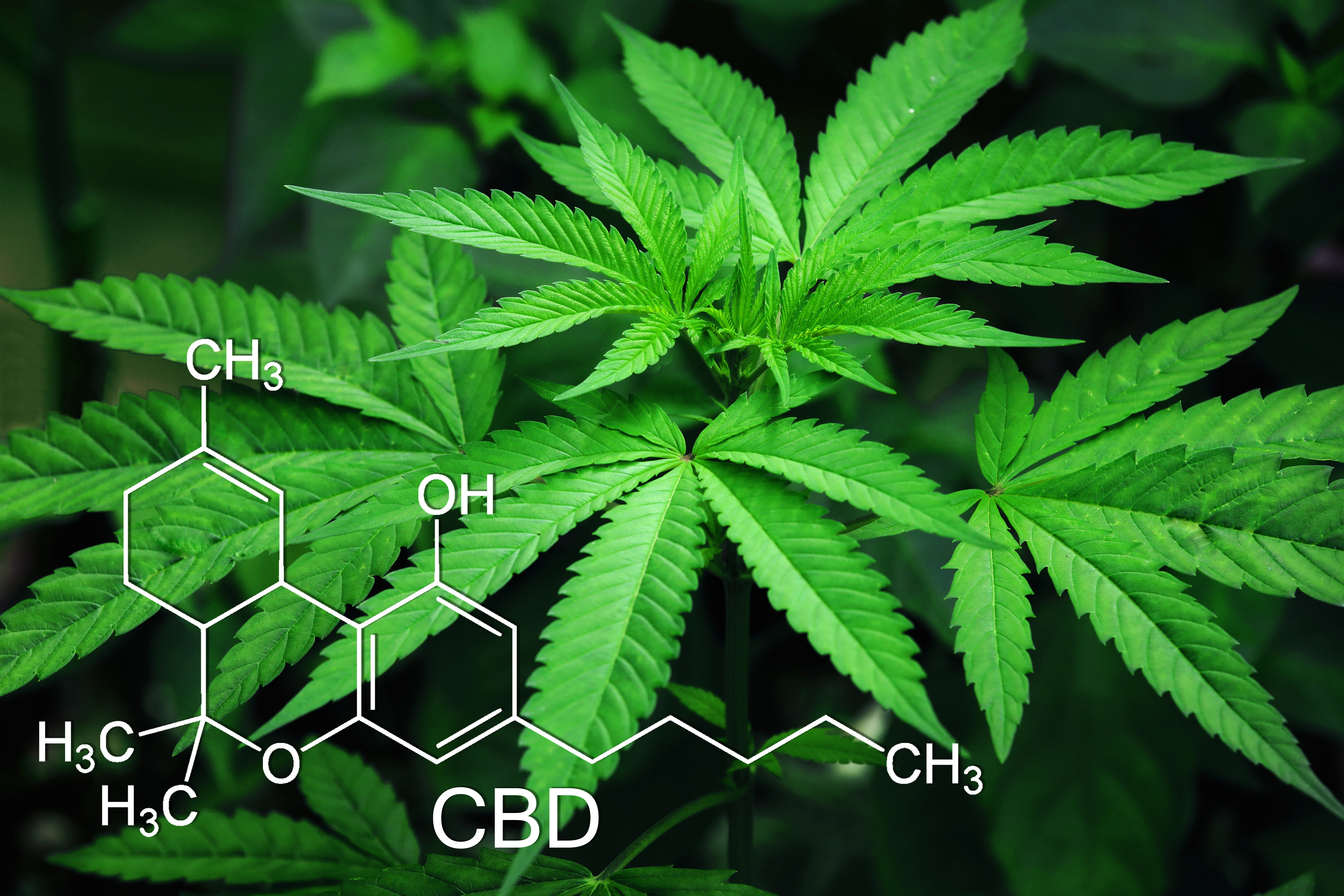 Decarboxylation for Large Scale CBD Production
