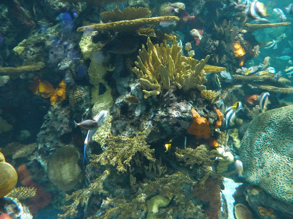 Can High Tech Save Coral Reefs from Extinction?