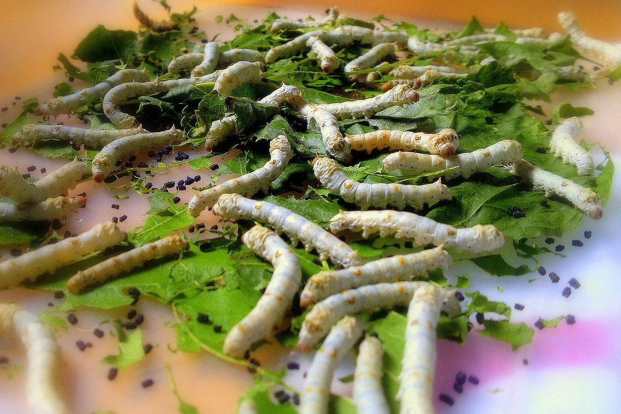 "Genetically Engineered Silkworms Produce Human ""E-Selectin"""